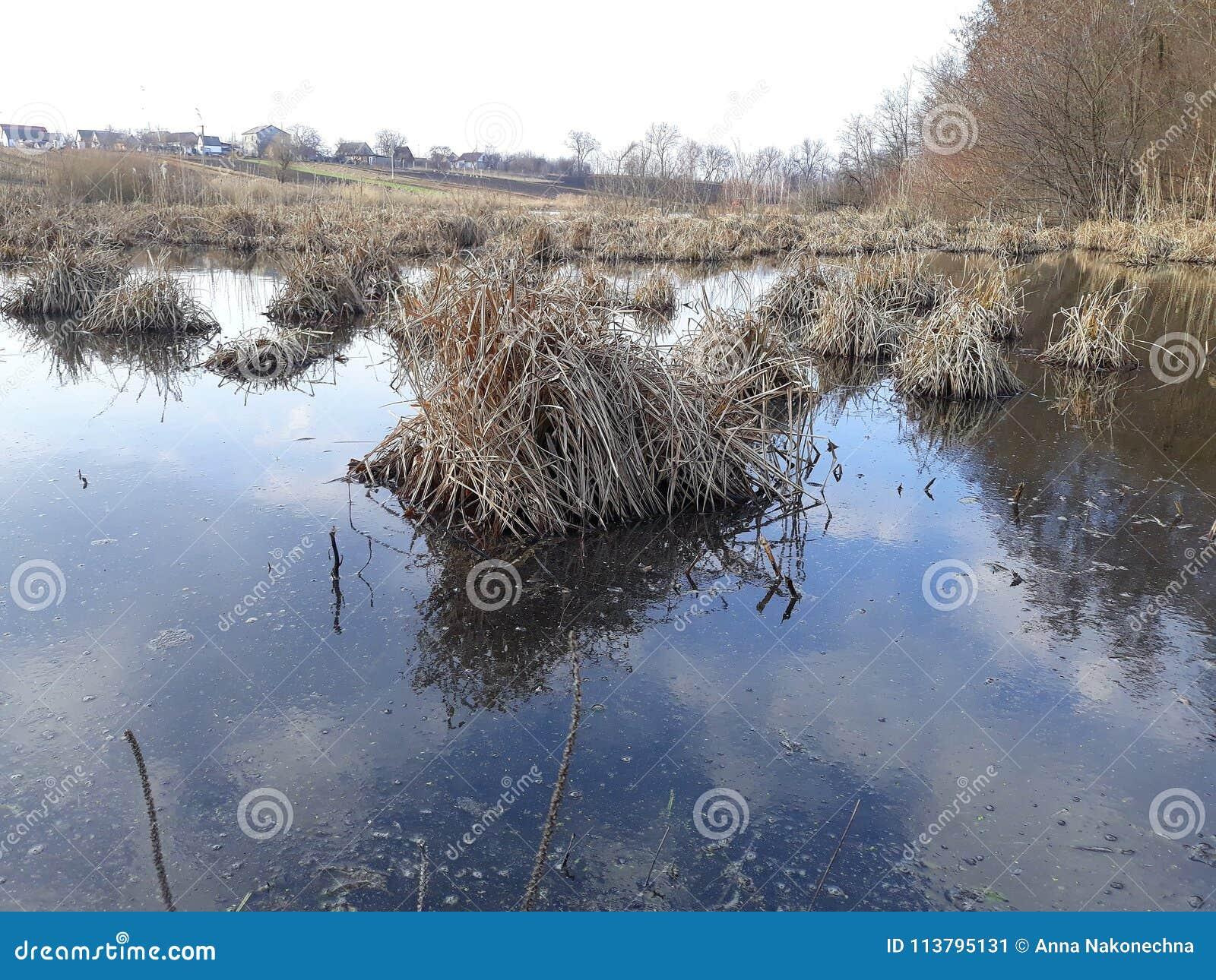Les accumulations de l herbe sèche en rivière marécageuse