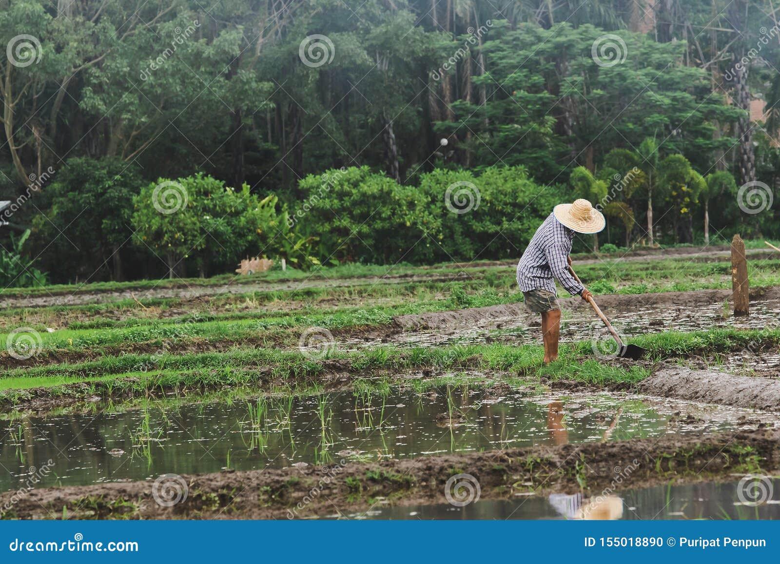 Les agriculteurs creusent le sol