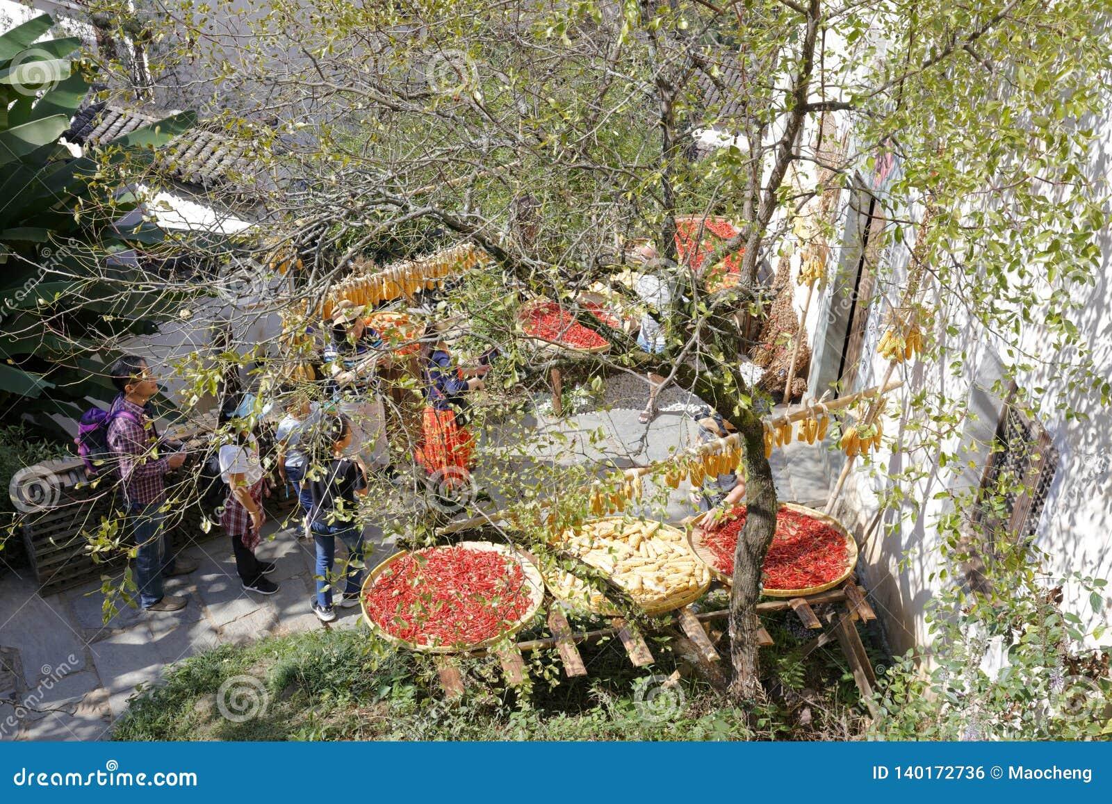 Les agriculteurs sèchent les produits agricoles dans le village de montagne, l adobe RVB