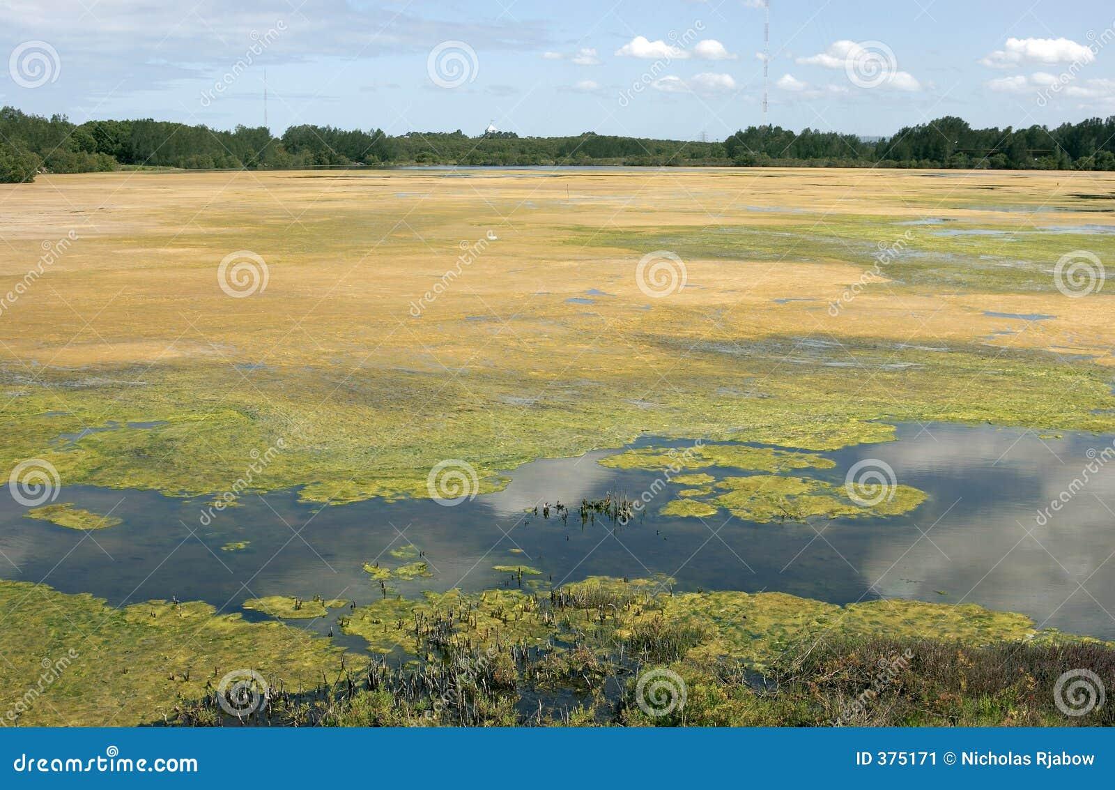 Les algues ont couvert le lac