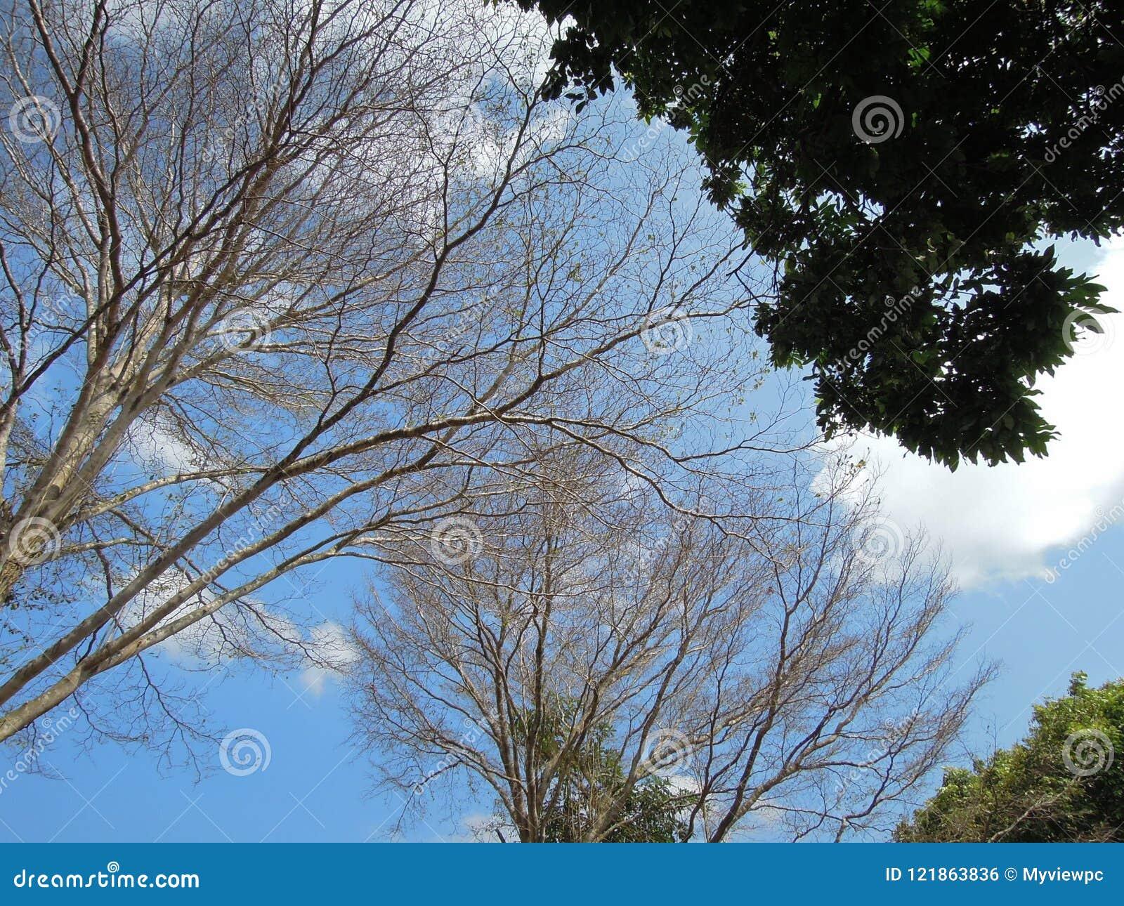 Les arbres aiment le ciel-tisserand fabriquer