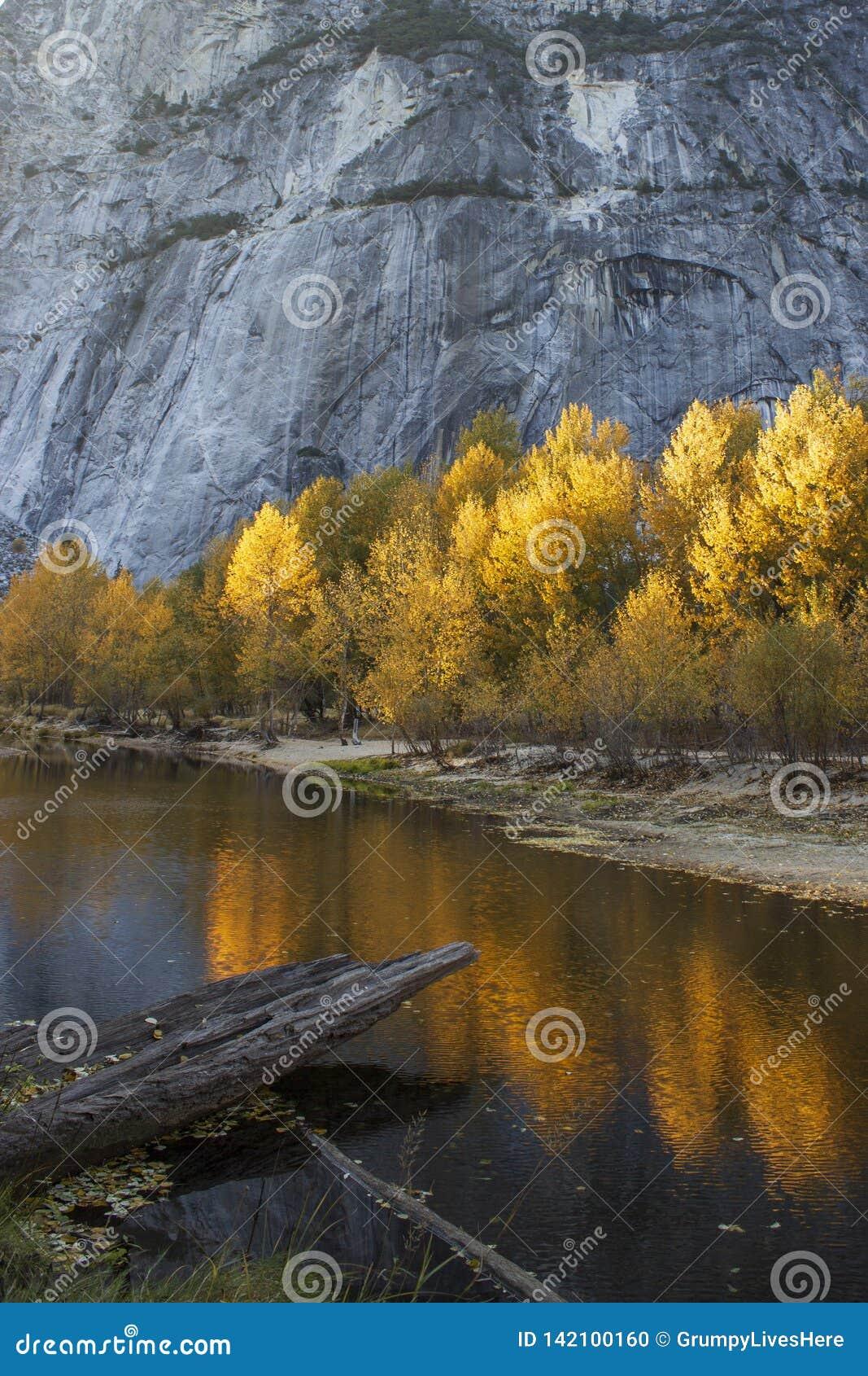 Les arbres d or ensoleillés vibrants se sont reflétés dans l eau au demi dôme, Yosemite