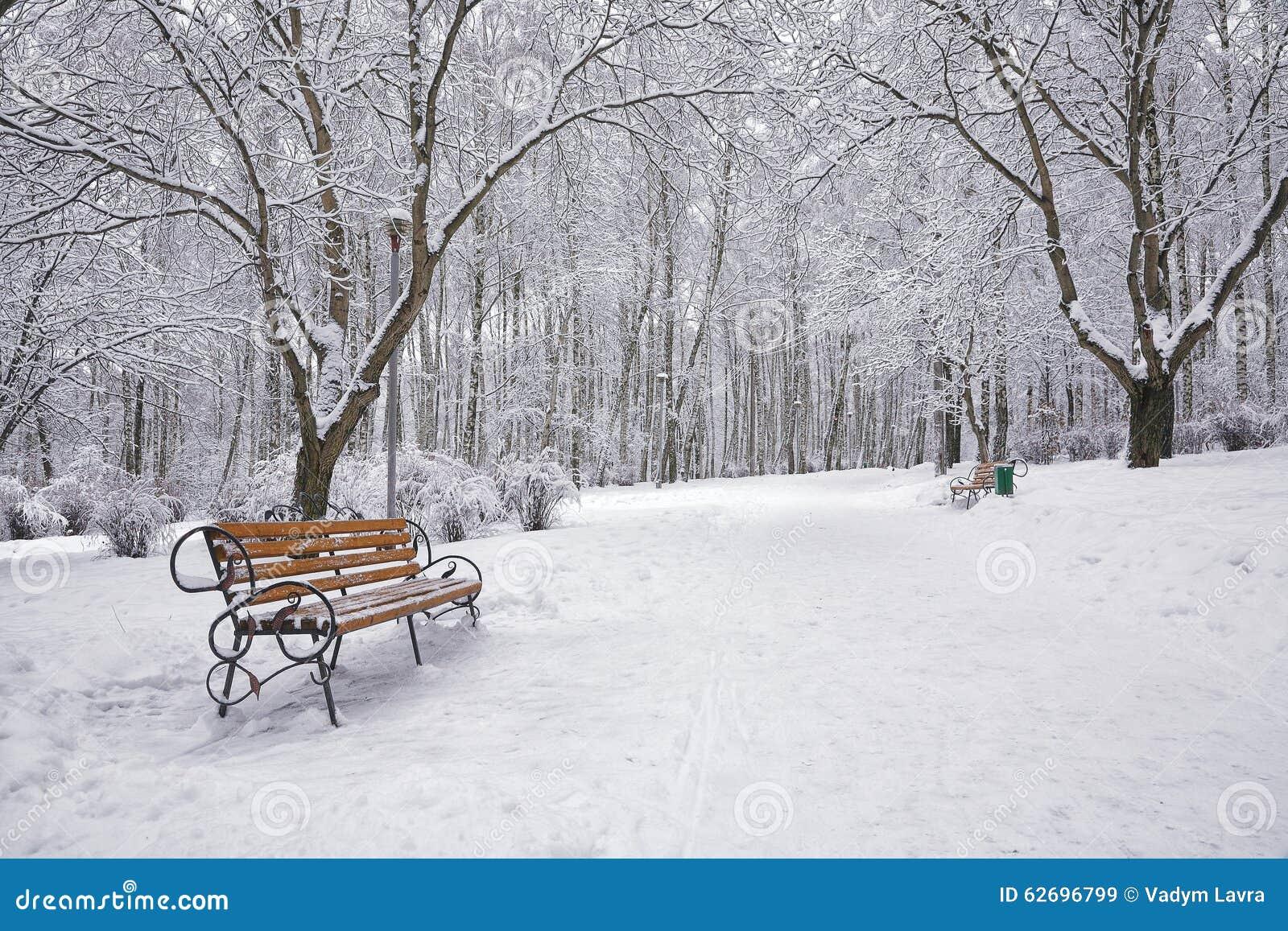 Les arbres et les bancs couverts de neige dans la ville se garent