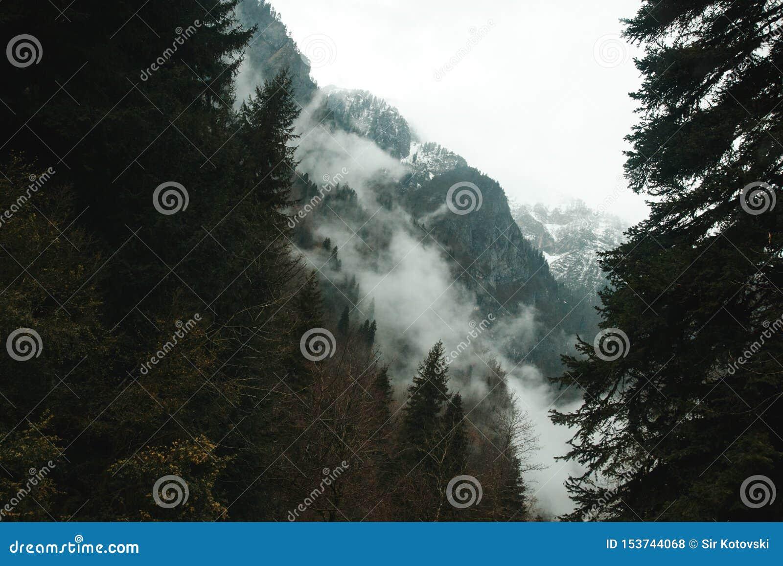 Les arbres se développent sur les montagnes rocailleuses