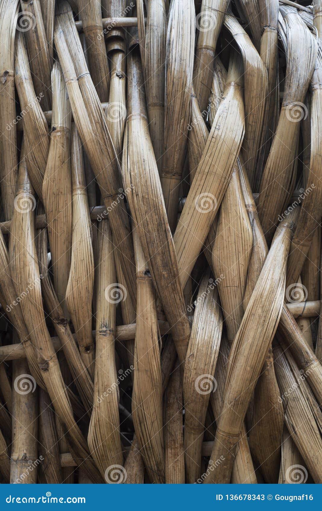 Les bambous aplatis ont piqué ensemble