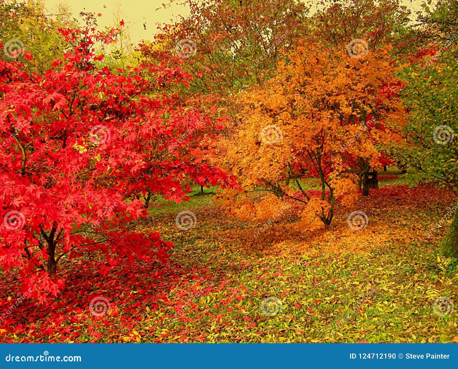 Les belles couleurs d automne dans la région boisée marche en parc
