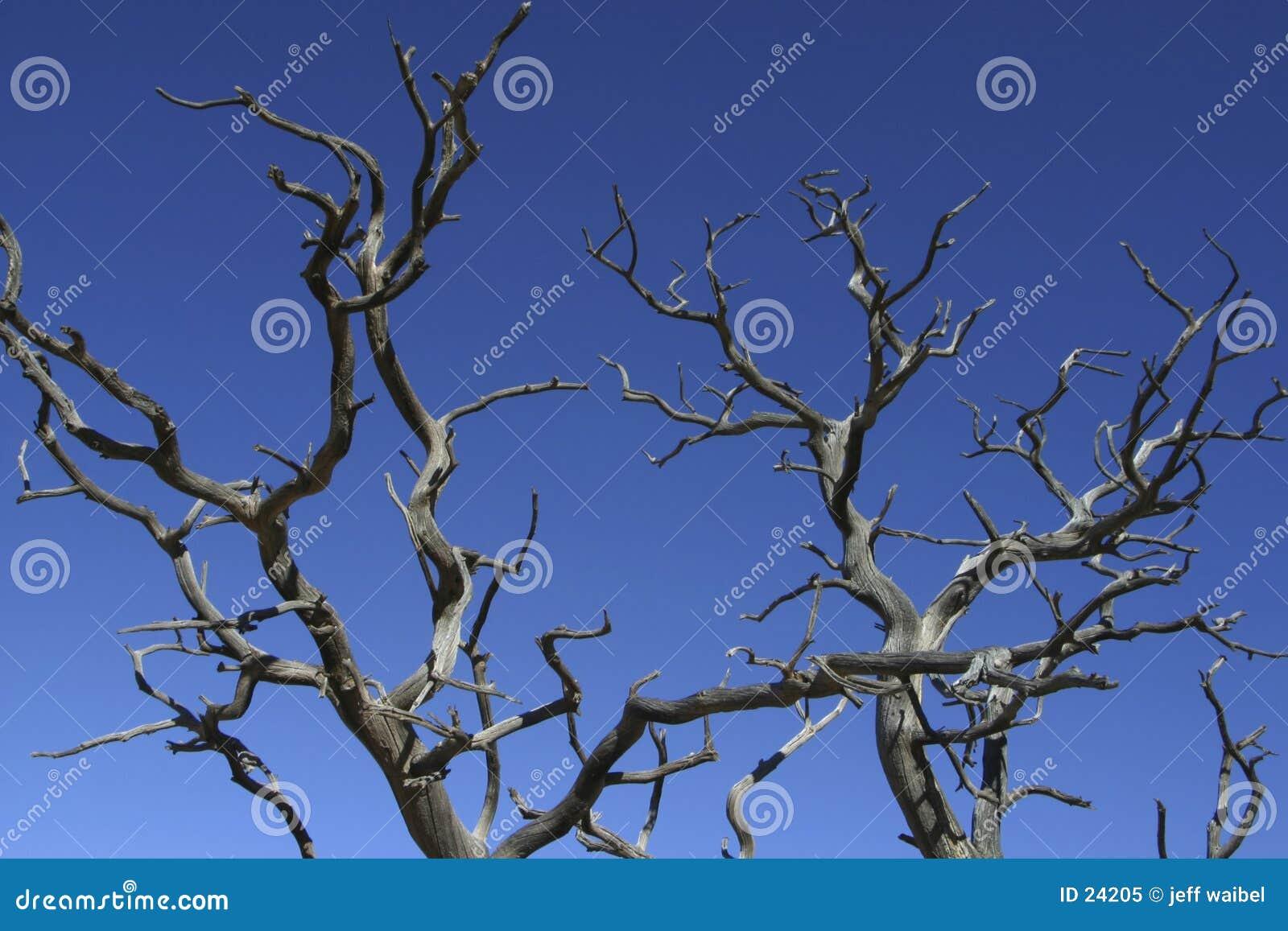 Les branchements atteignent vers le ciel