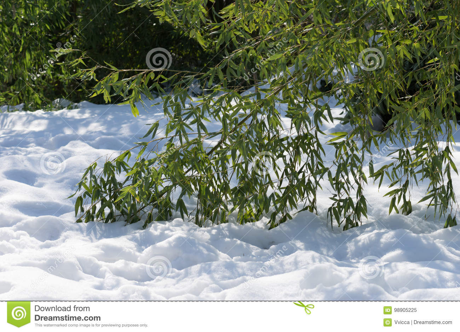Les branches ont cintré le bambou se trouvant sur la neige blanche