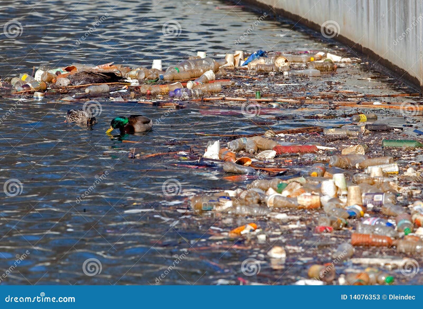 Les canards de forager s approchent des ordures recyclables.