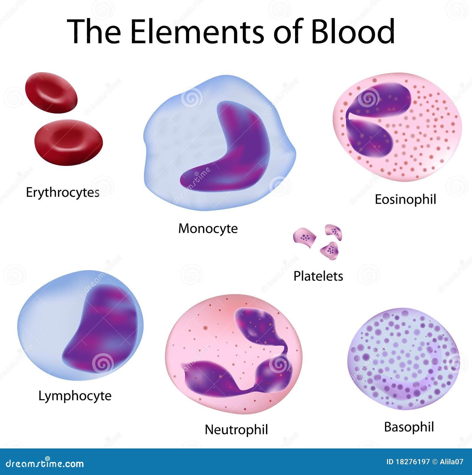 les cellules du sang 18276197