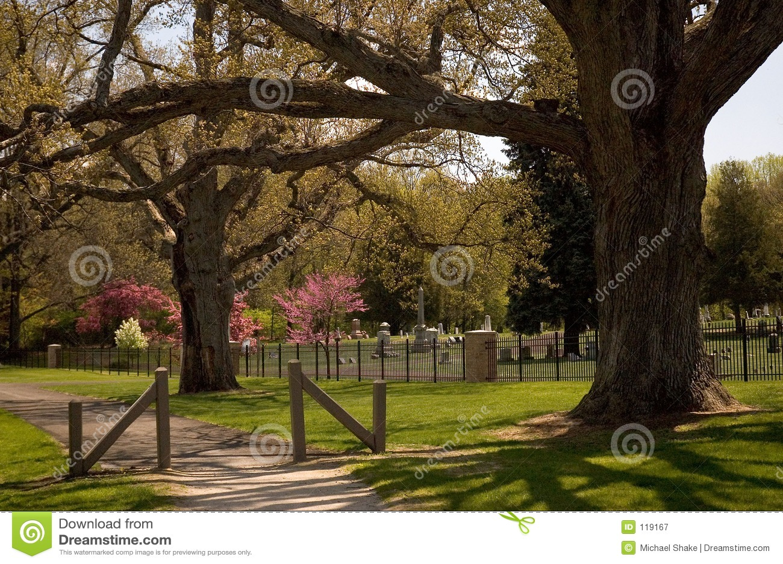 Les chênes majestueux gardent un cimetière