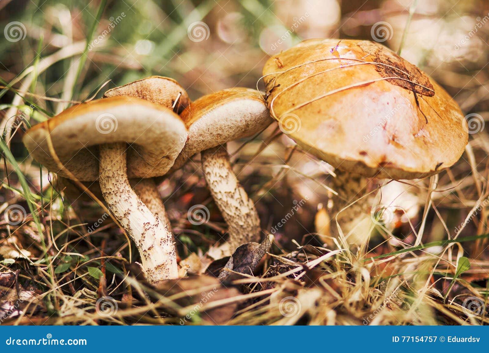 Les champignons sont beaux