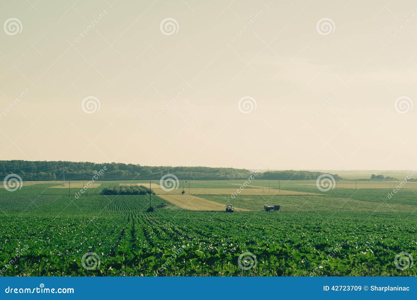 Les champs éloignés avec des tracteurs dans le rétro appareil-photo de film filtrent
