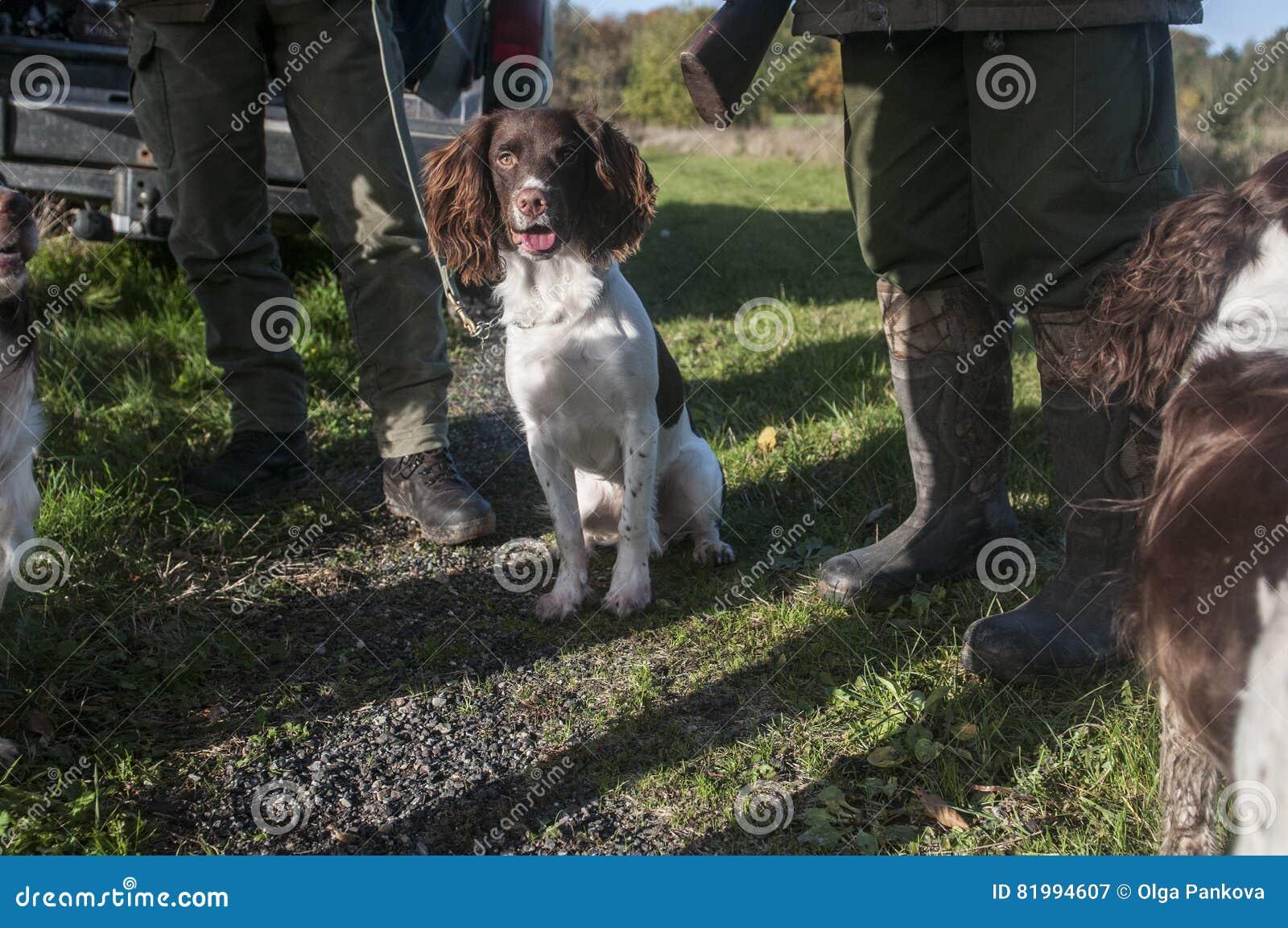 Les chasseurs et les chiens de chasse détendent la chasse à efter