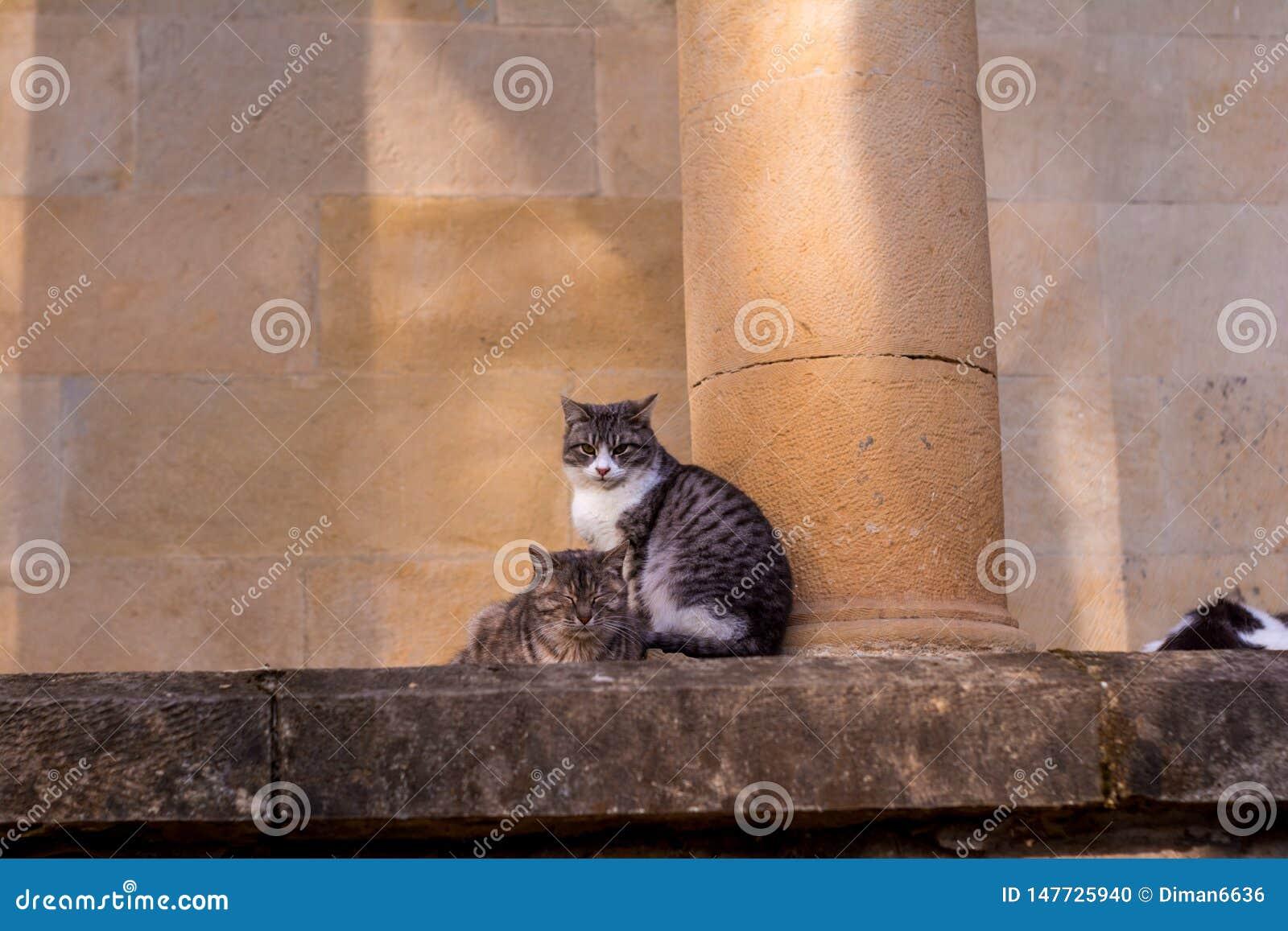 Les chats se reposent sur une pierre et tombent endormi