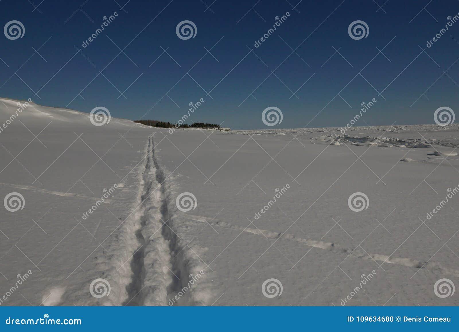 Les chemins de croisement, ski backcountry dépiste les voies de intersection de coyote dans la neige