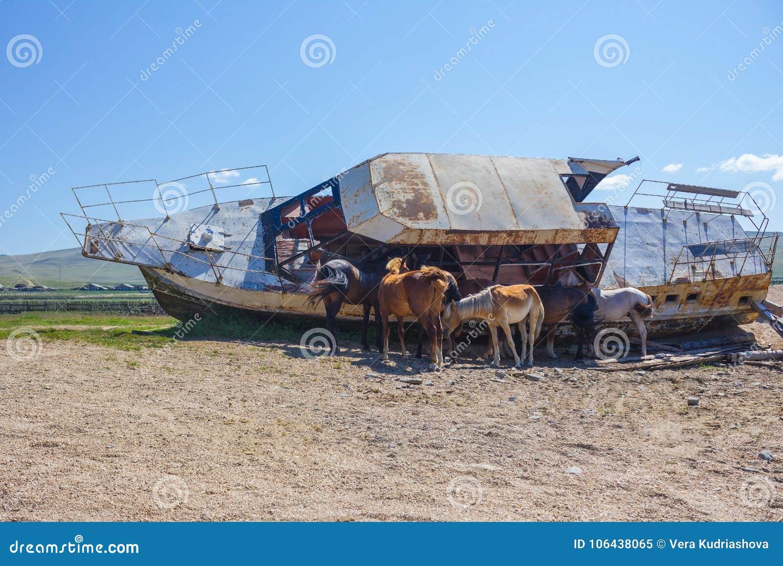 Les chevaux se cachent de la chaleur