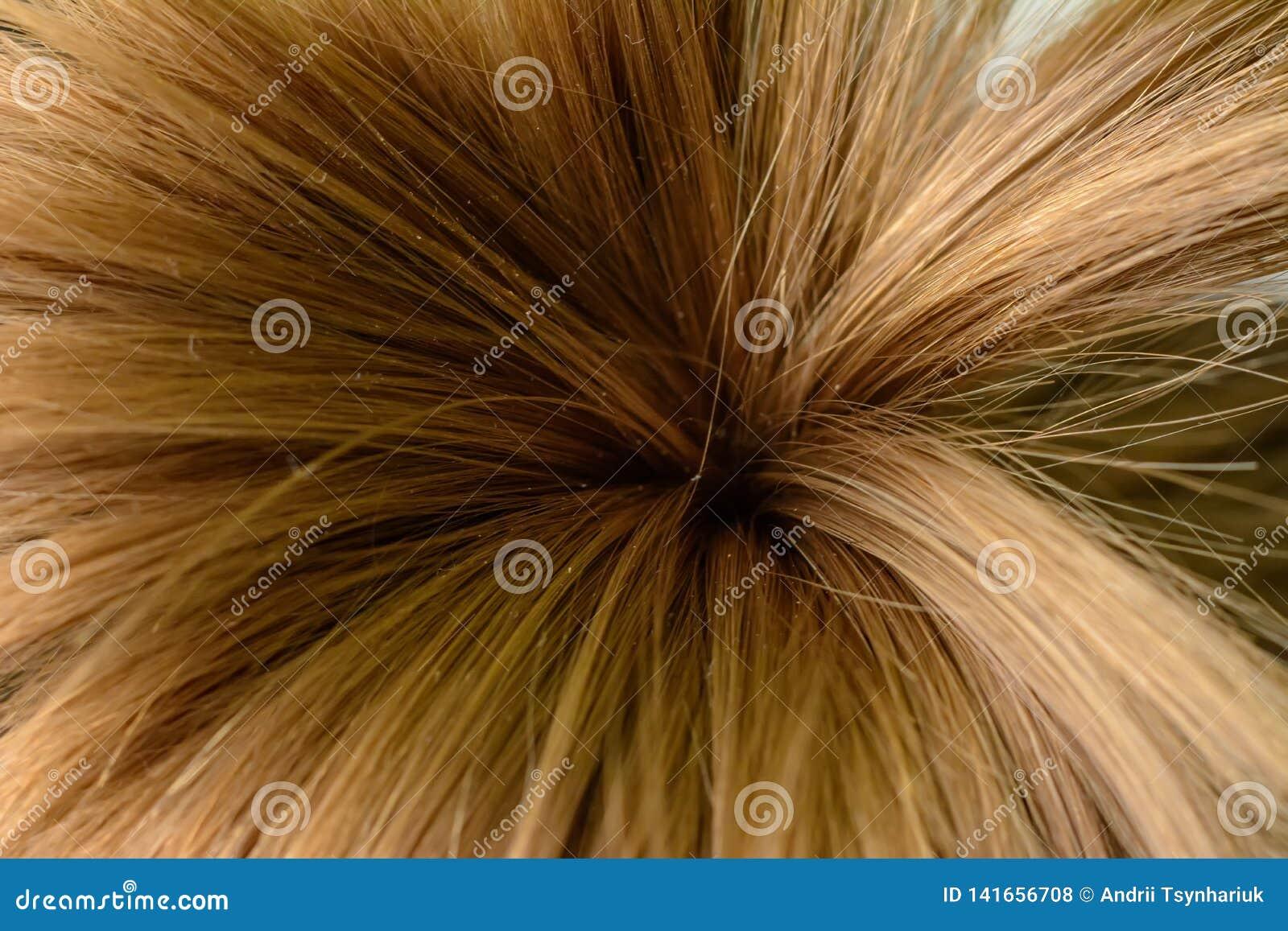 Les cheveux d une petite fille, attachés sous forme de palmiers, et tirés sur le macro
