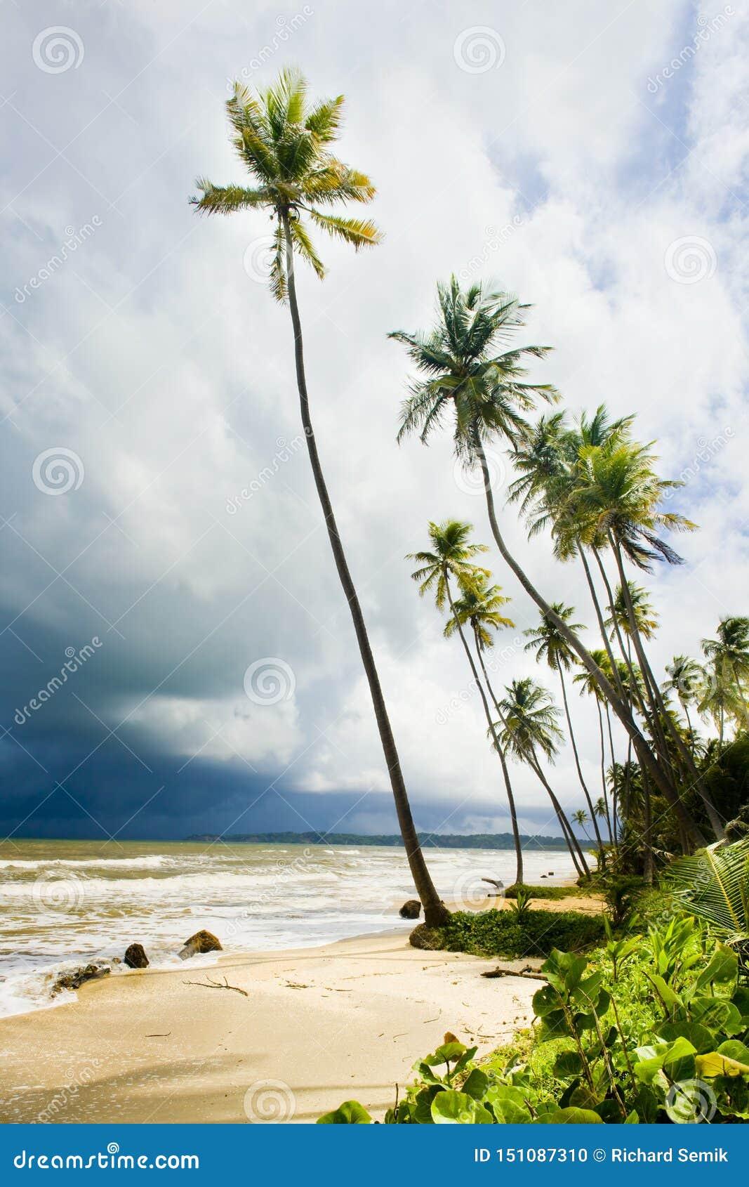 Les Cocos aboient, le Trinidad