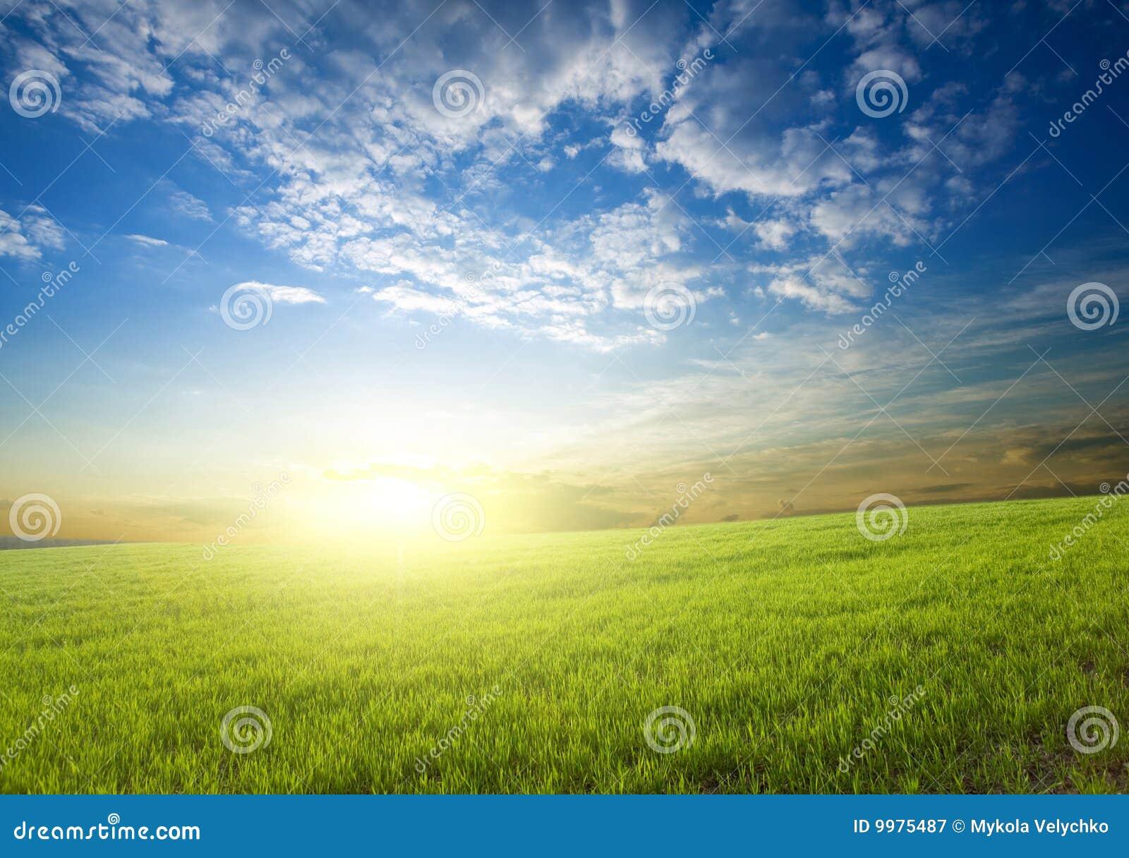 Les collectes verdissent au-dessus du coucher du soleil