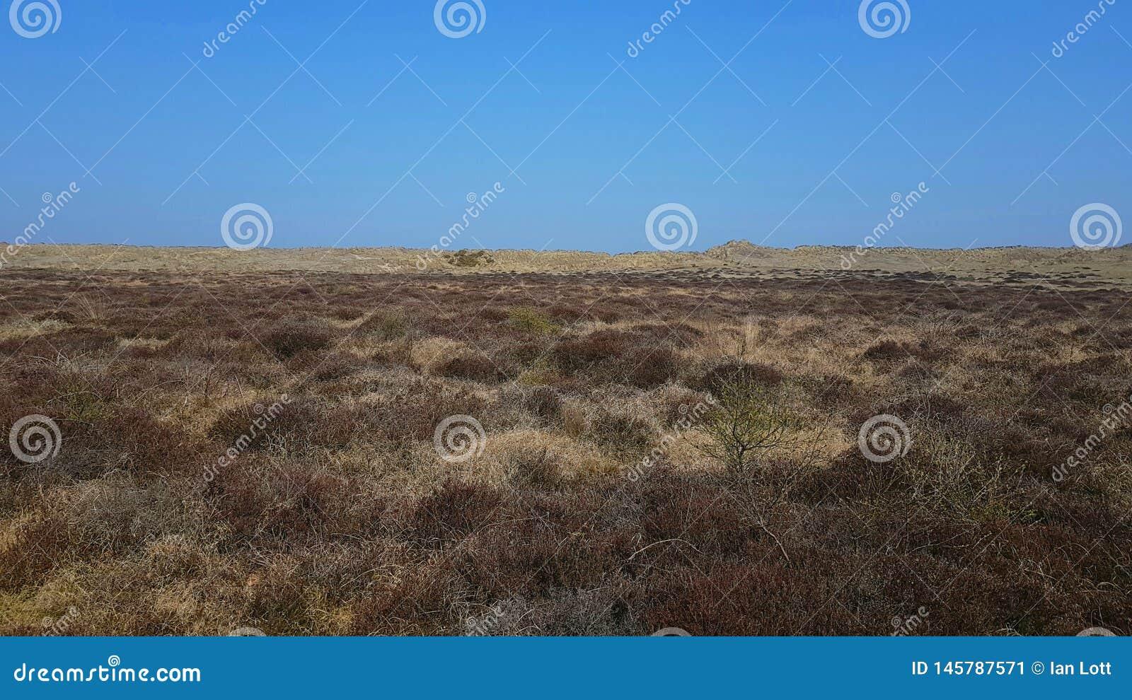 Les dunes Winterton-chevalines est un site biologique et géologique de 427 hectares de Great Yarmouth scientifique spécial LE R-U