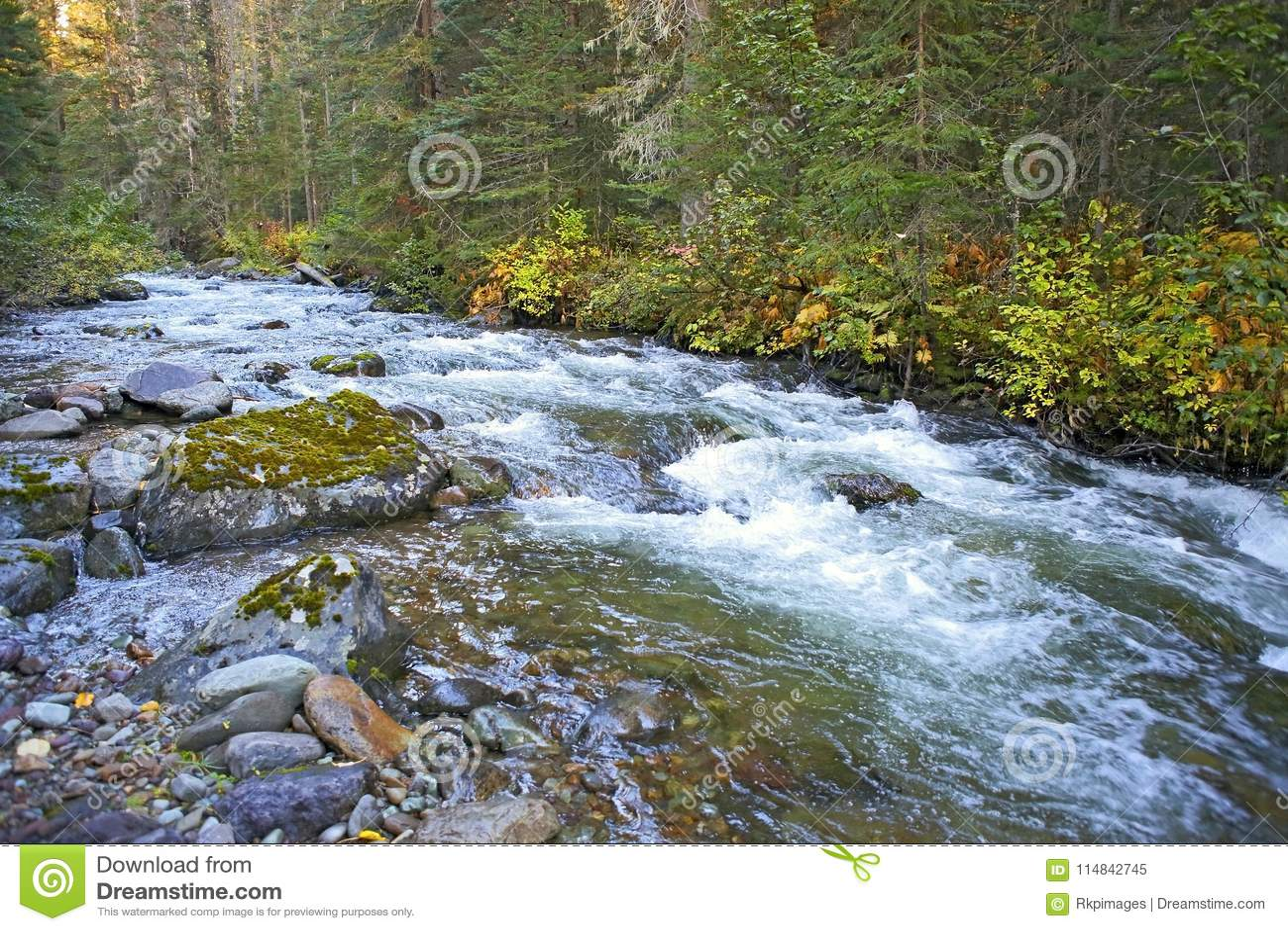 Les eaux de précipitation de la crique intacte de région sauvage