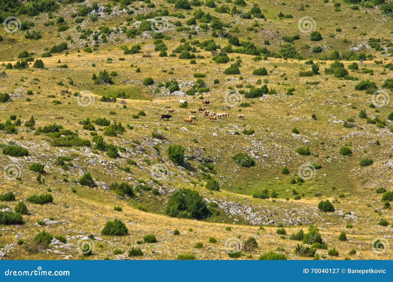 Les effondrements de Karst, détail de agacent le paysage de plateau