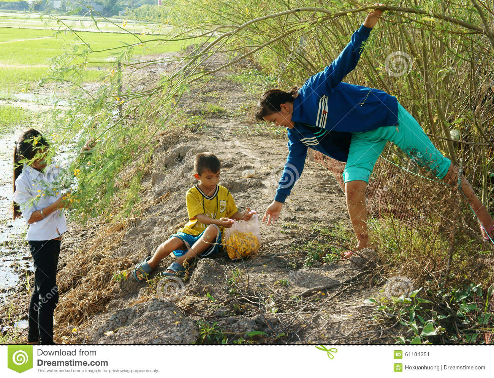 Les enfants asiatiques, bong dien dien, sesbana de Sesbania, delta du Mékong
