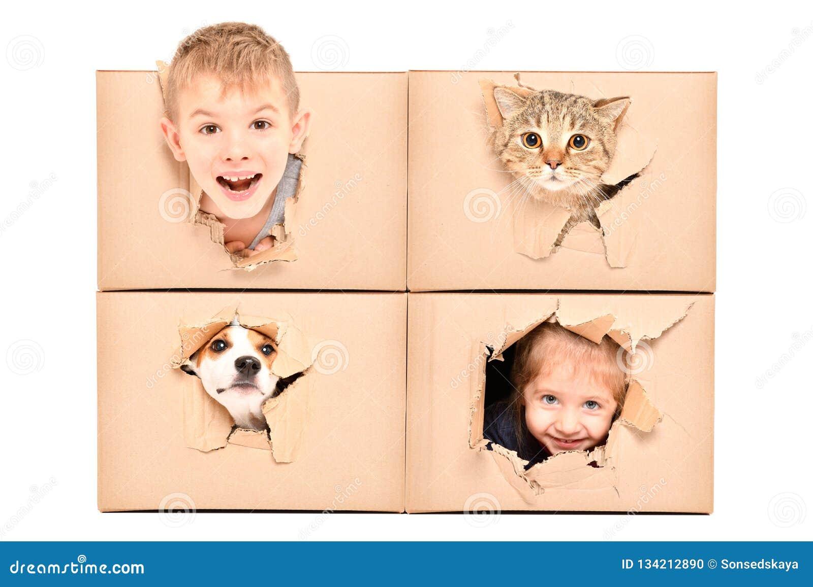 Les enfants et les animaux familiers drôles regarde hors d un trou déchiré dans une boîte