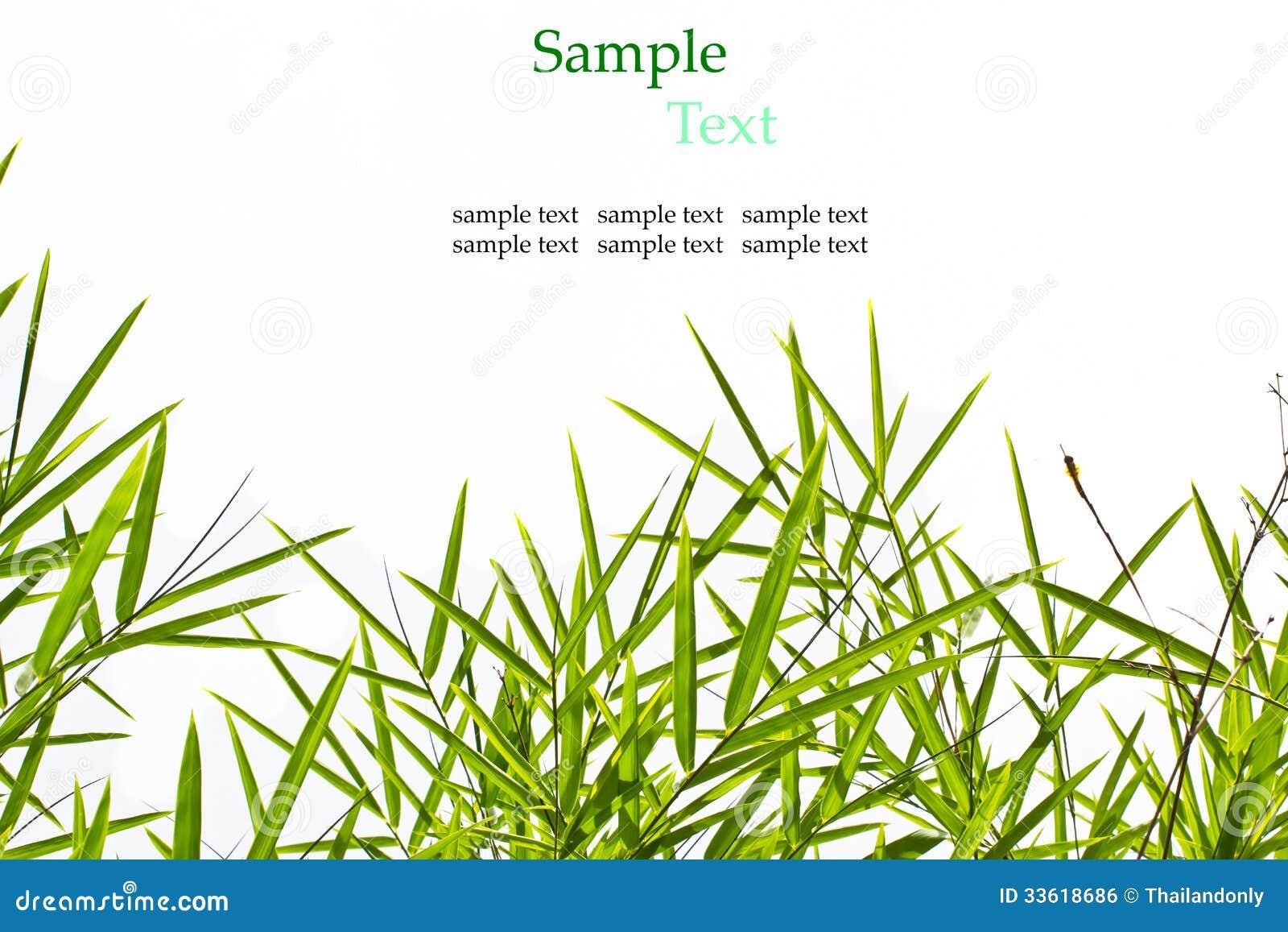 Les feuilles de bambou d 39 isolement sur le fond blanc avec - Tout sur le bambou ...