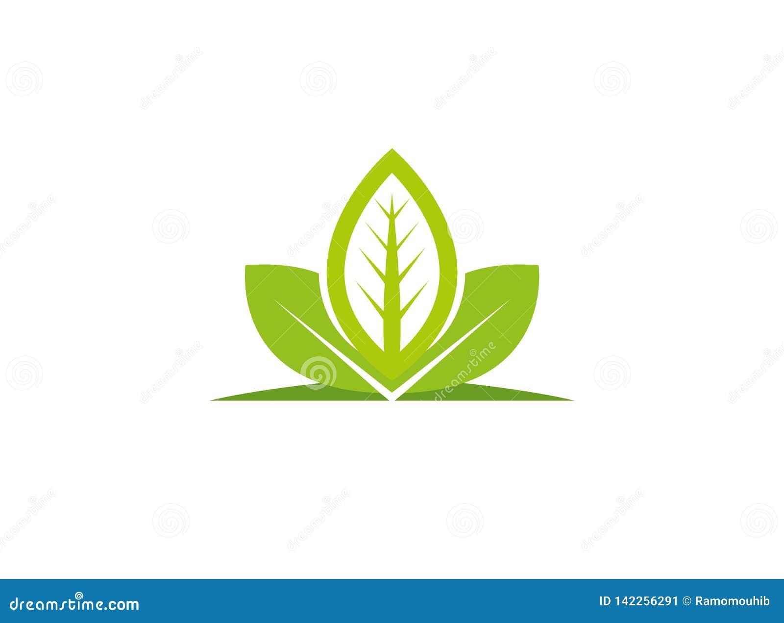 Les feuilles plantent pour l illustration de conception de logo, icône de nature