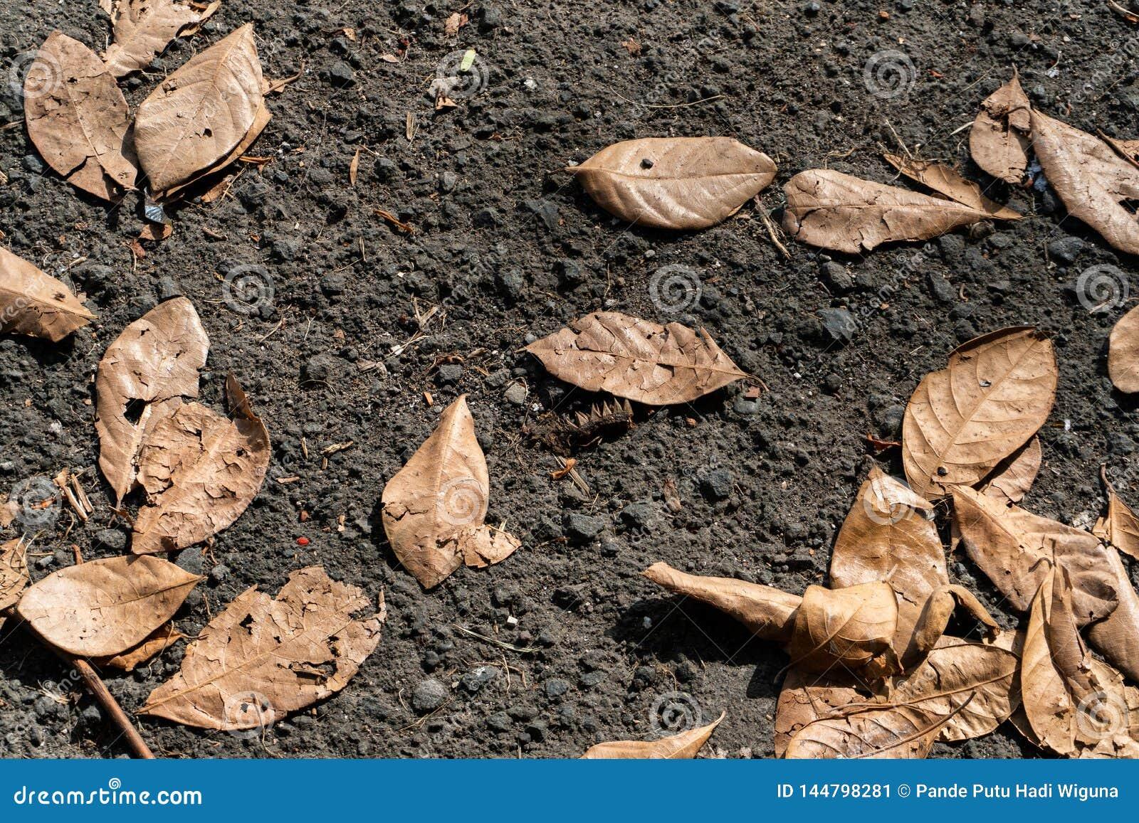 Les feuilles sèches jaunâtres tombent sur l asphalte noir pendant des jours chauds