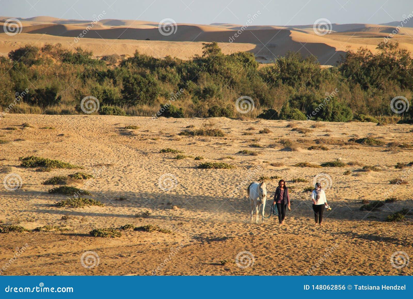 Les filles impliquées dans des sports équestres mènent un cheval sur une corde contre le contexte des dunes