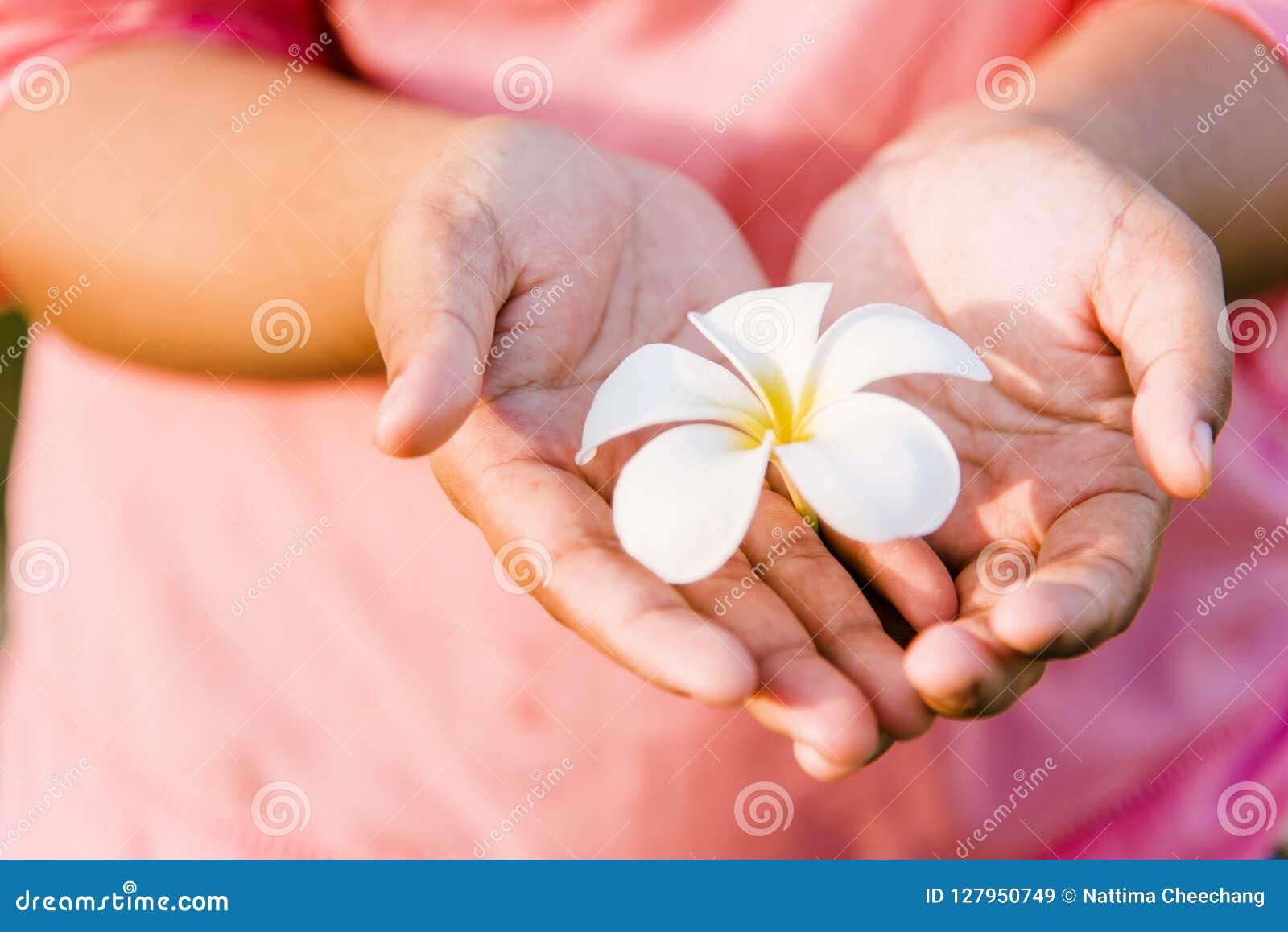 Les fleurs blanches dans des mains en forme de coeur a un fond rose