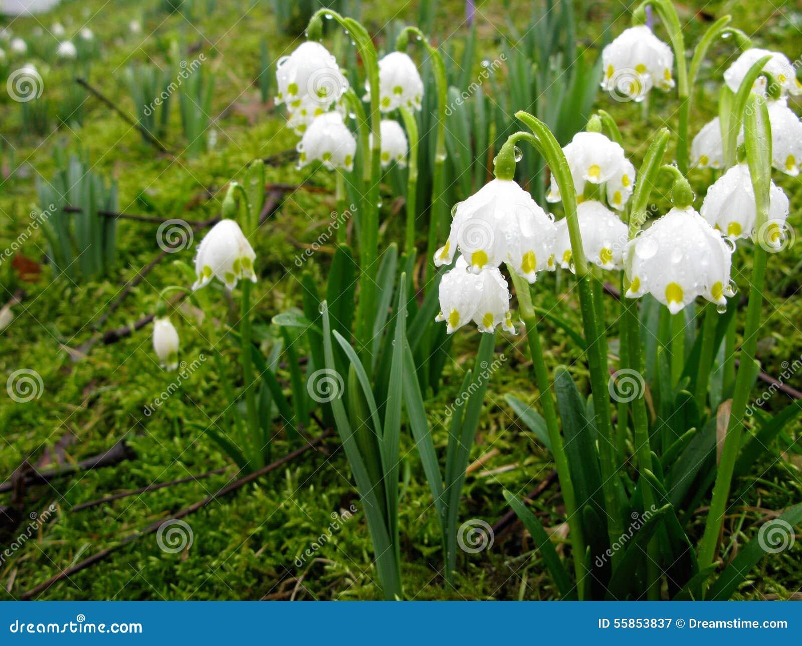 lac fleurs printemps blanches - photo #26