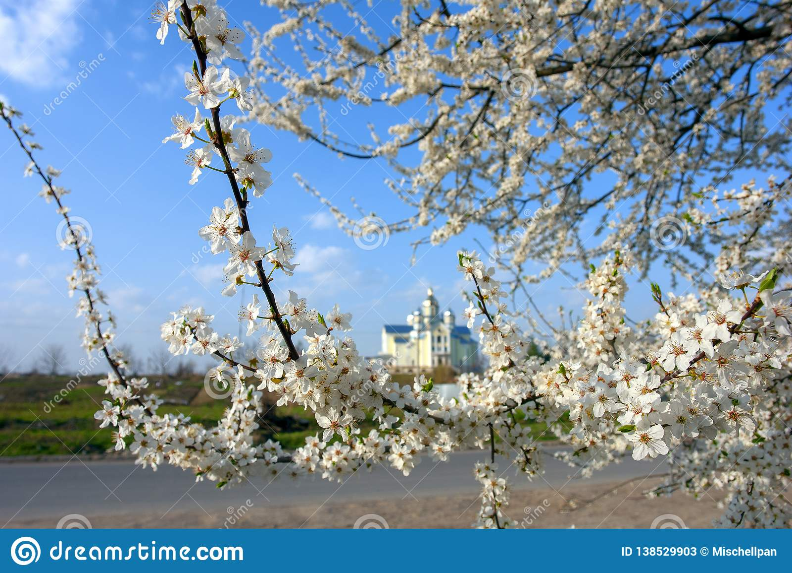 Les fleurs d Apple fleurissent au printemps d un beau jour ensoleillé
