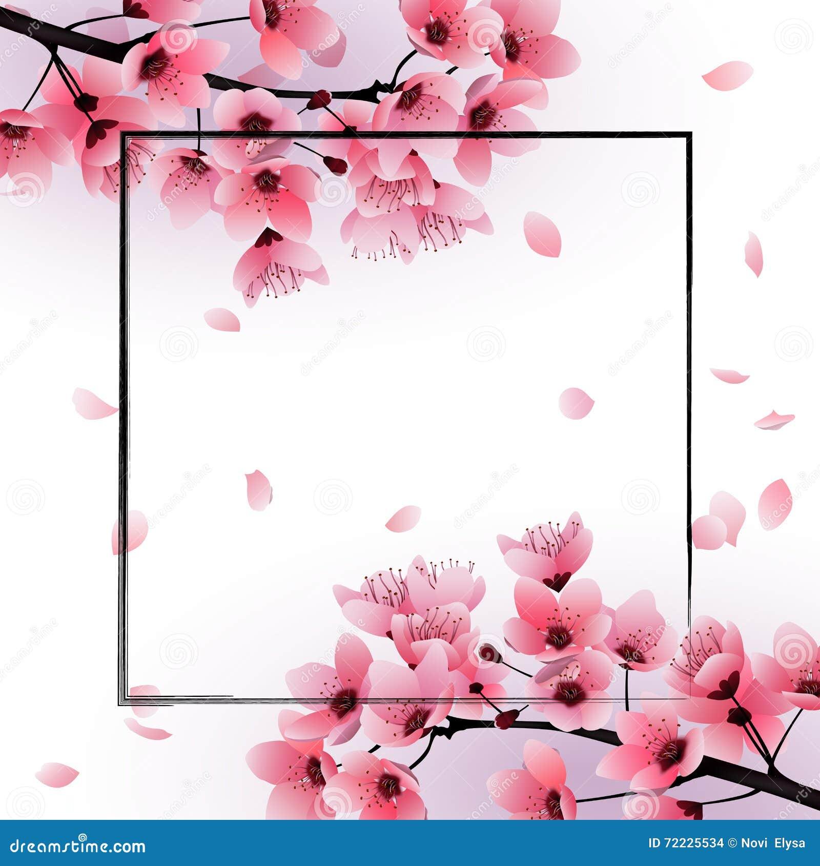 Les Fleurs De Cerisier Fra Ches Sakura Fleurissent Sur Le Fond