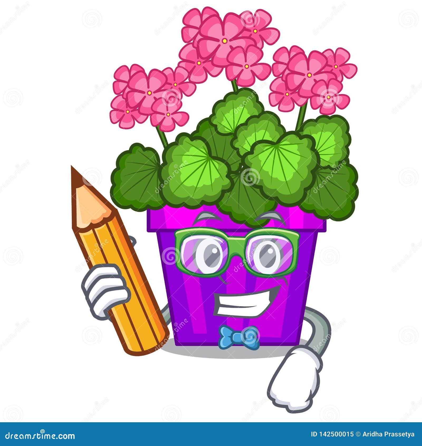 Les fleurs de géranium d étudiant collent la tige de caractère