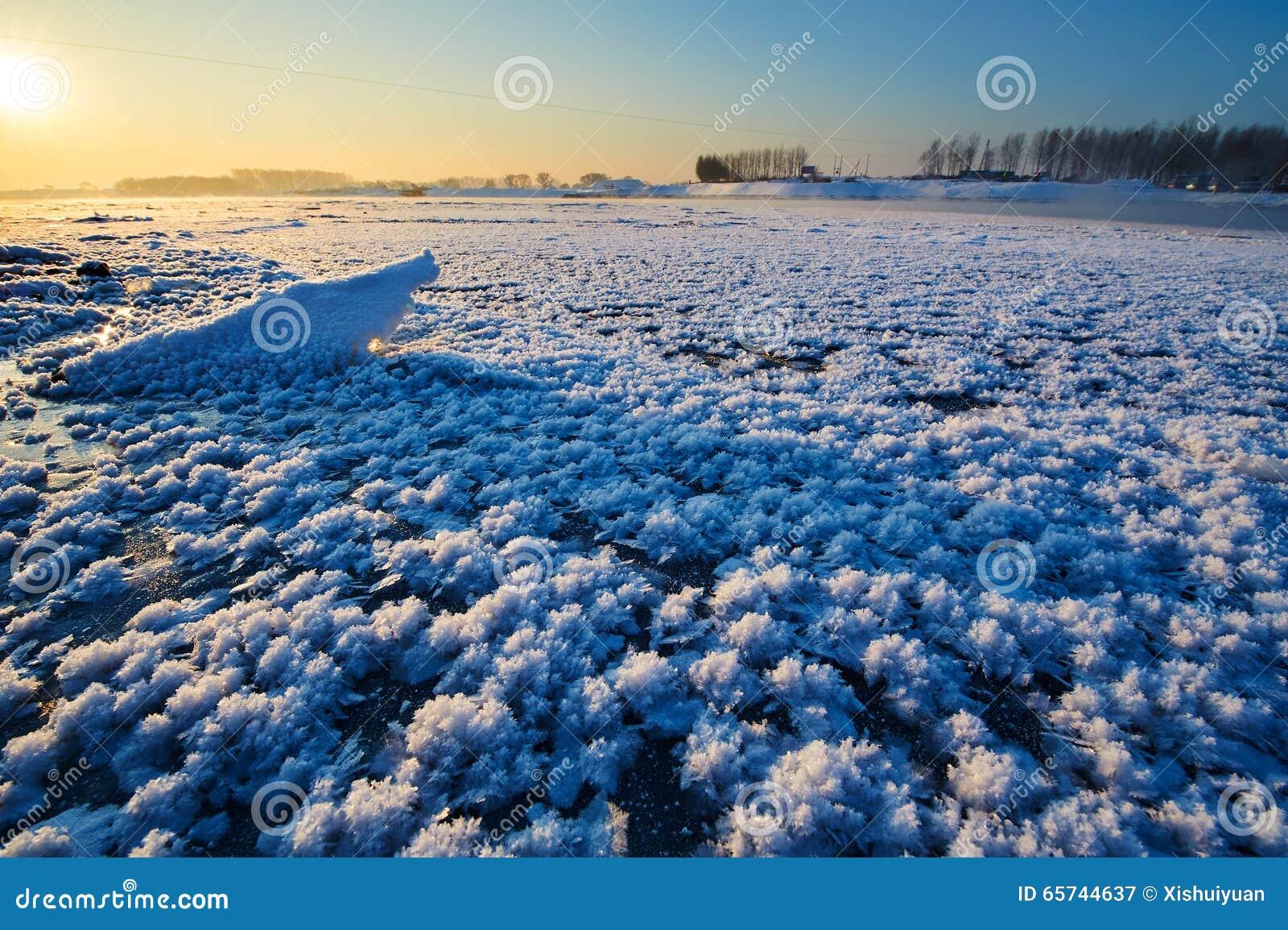 les fleurs de glace en rivière photo stock - image: 65744637