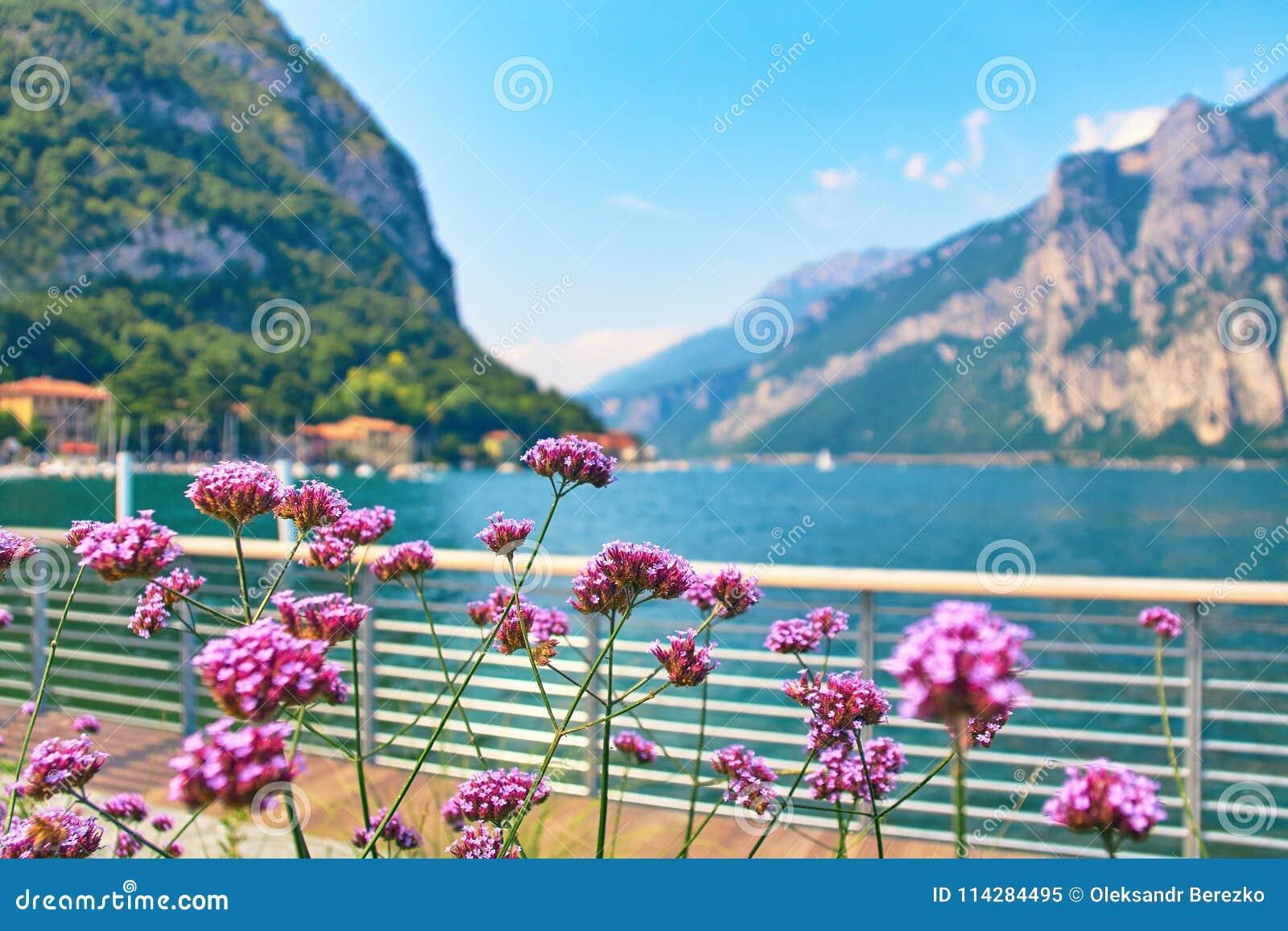 Les fleurs violettes sur les banques alpines raides du beau lac Como avec les bateaux et les yachts garés s approchent du village