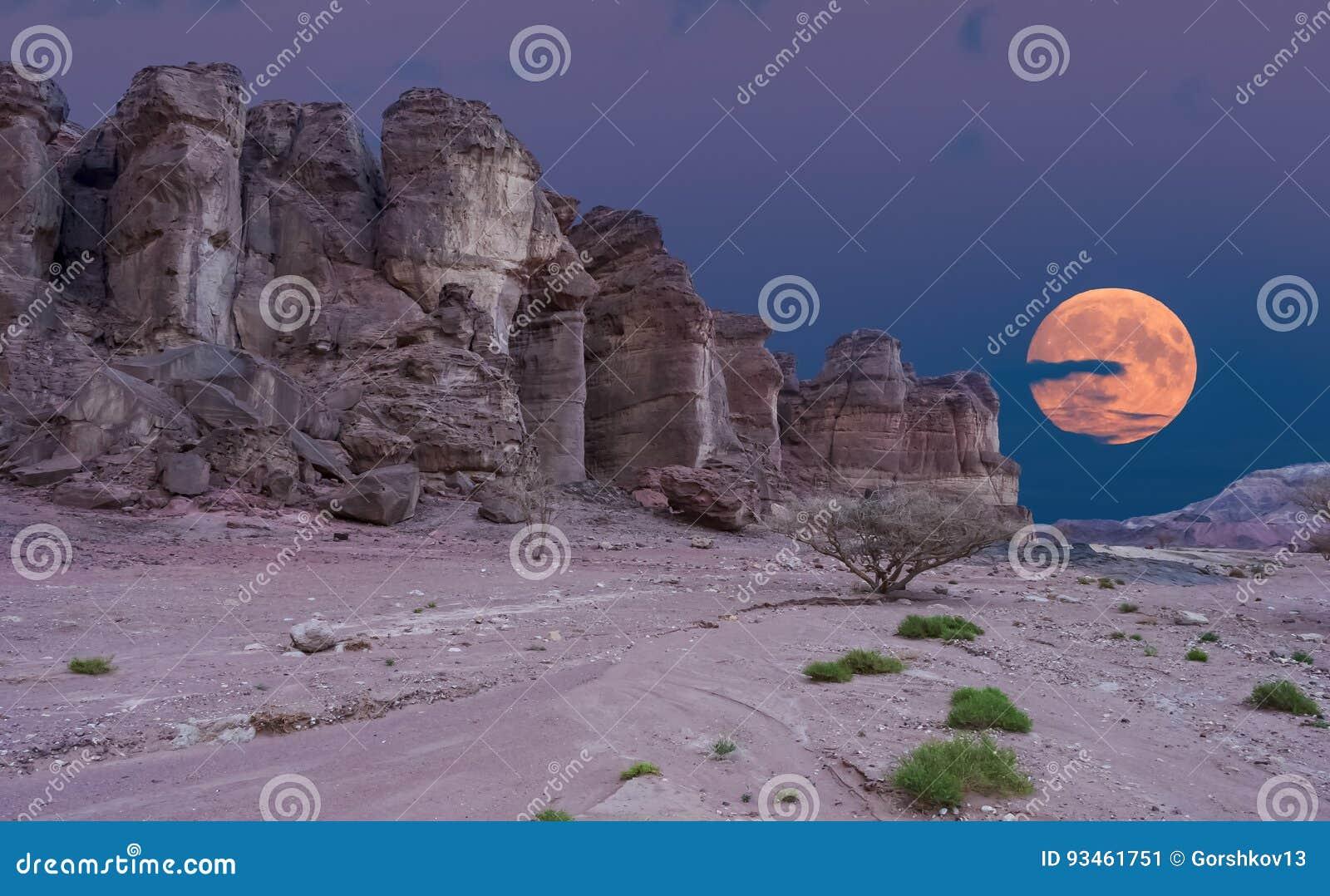 Les formations géologiques en nature abandonnent la vallée du parc de Timna, Israël
