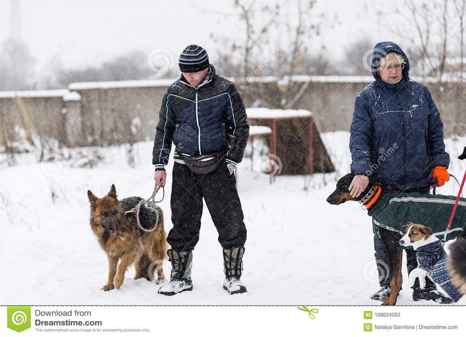 Les gens marchent leurs chiens pendant l hiver