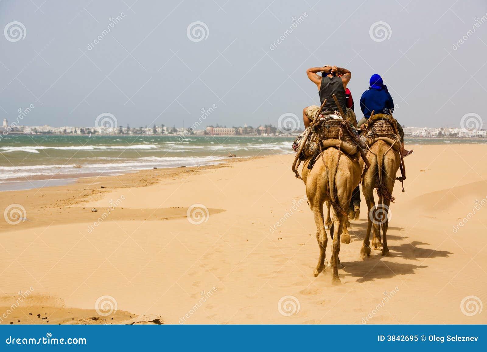 Les gens sur le chameau à la plage près d Essaouira