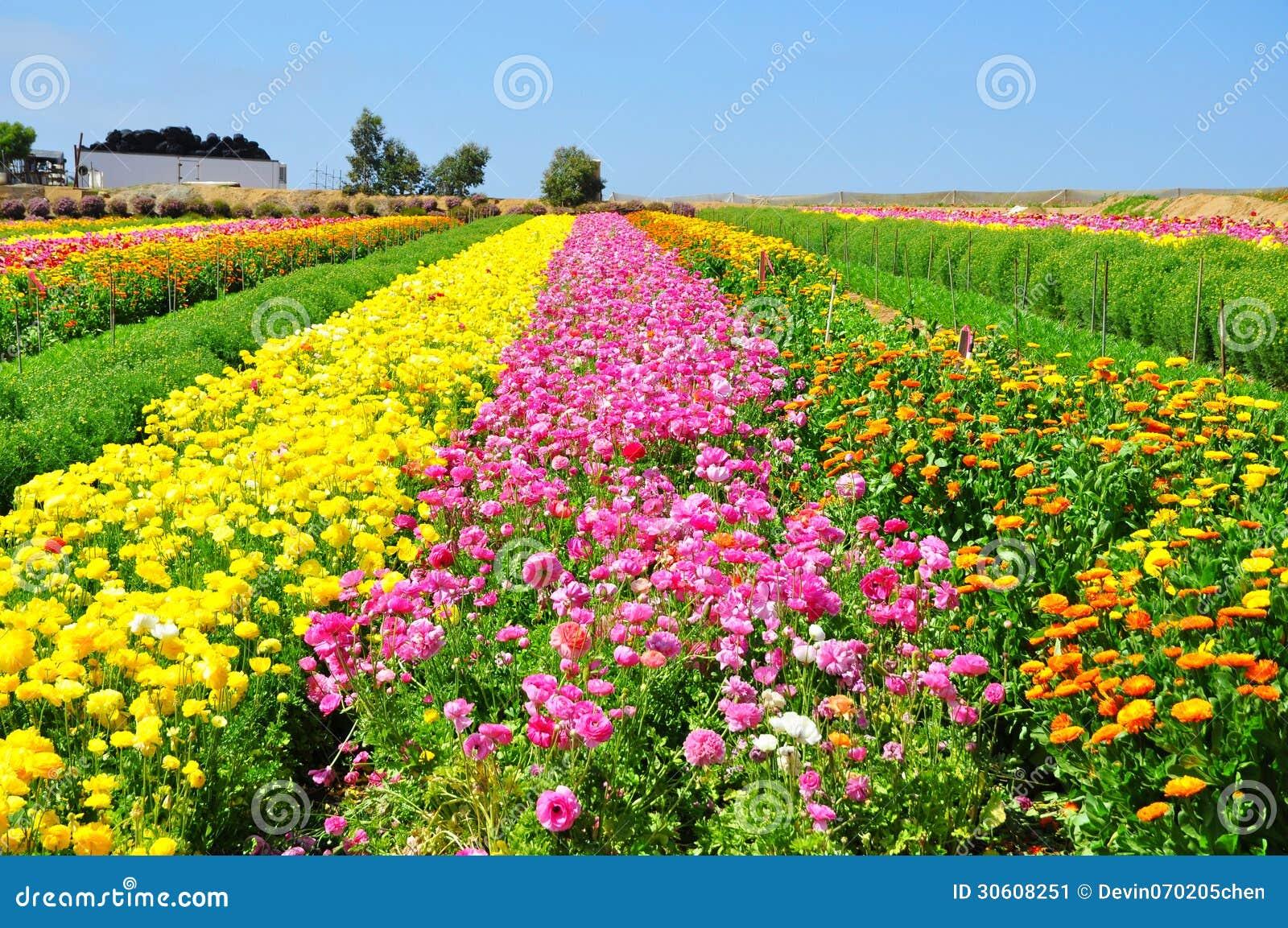 Les gisements de fleur de Carlsbad