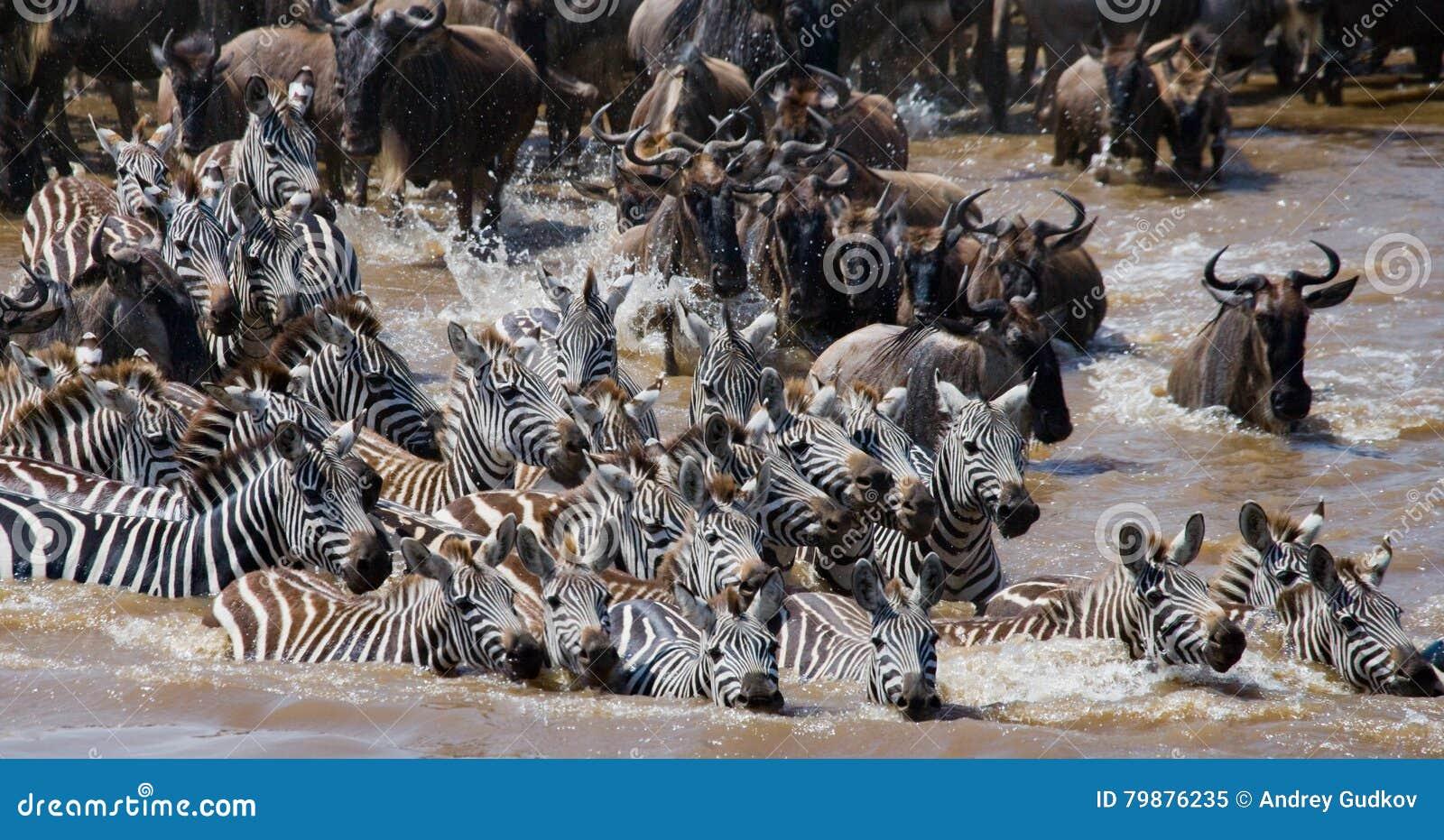 Les gnous traversent la rivière de Mara Transfert grand kenya tanzania Masai Mara National Park