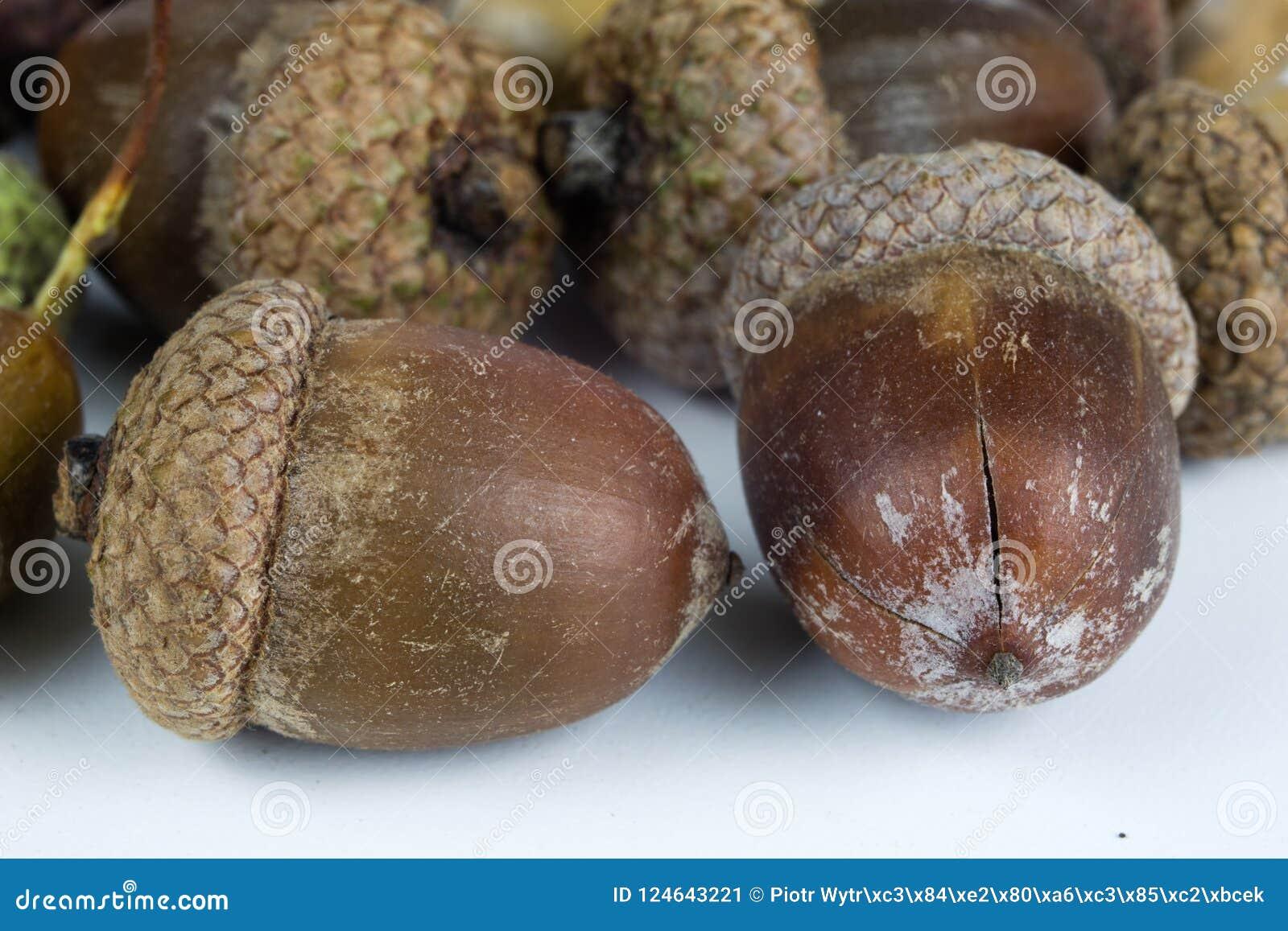 Les graines d arbre ont appelé un chêne sur une table blanche Les glands ont empilé prochain t