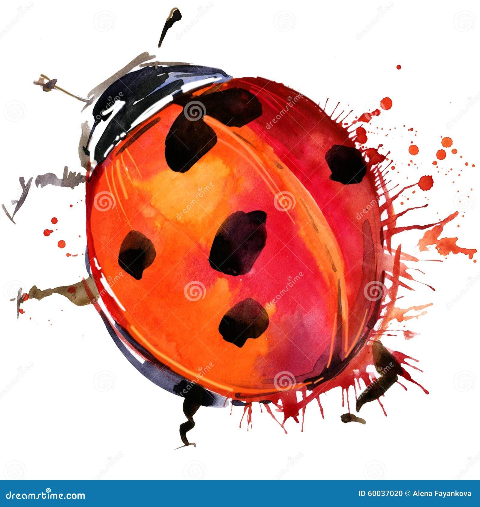 Les graphiques de T-shirt de scarabée de Ladybird, illustration de coccinelle avec l aquarelle d éclaboussure ont donné au fond u