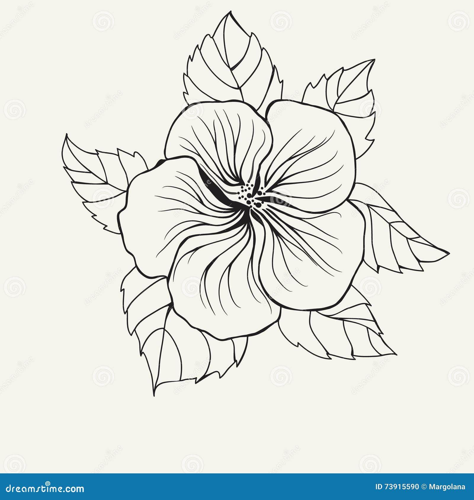 Coloriage Fleur Hawai.Les Ketmies D Hawai Fleurissent Poussent Des Feuilles Pour La Page