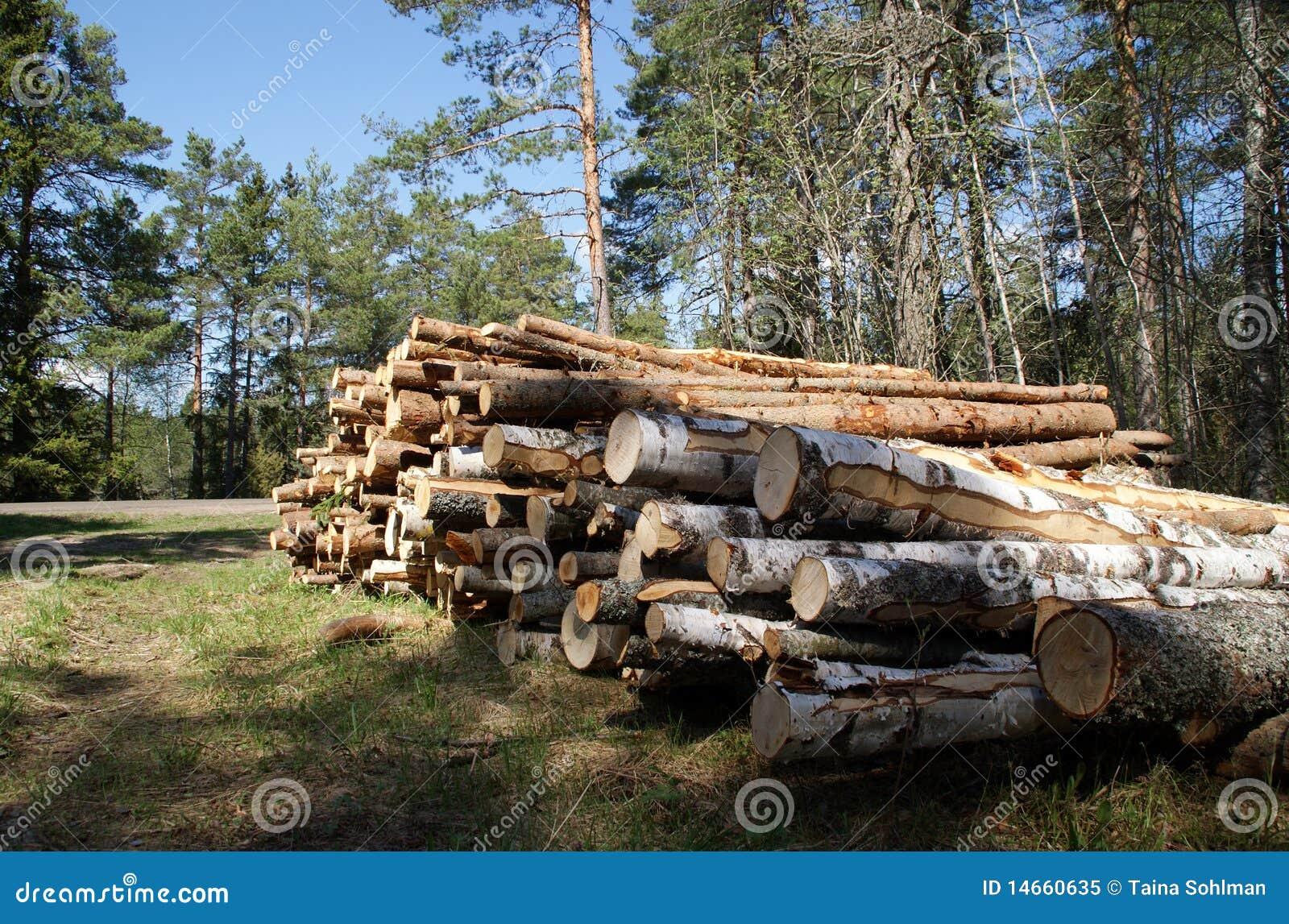 Les logarithmes naturels de bois de construction ont empilé au printemps la forêt
