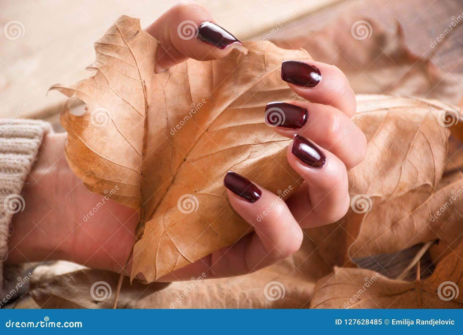 Les mains de femme avec le vernis à ongles brun de gel tient la feuille sèche de chute sur en bois et part